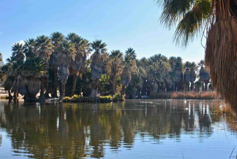 Pond 1 Restoration