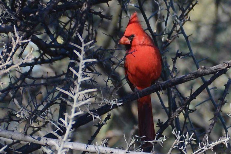 Birding at Agua Caliente Park